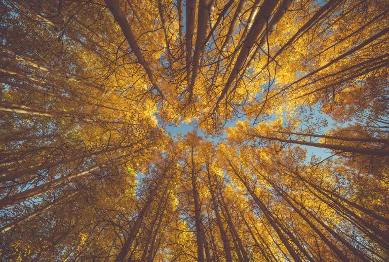 夏から秋へ変わる絵本