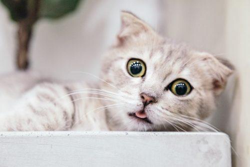 ネコ絵本の人気おすすめランキング20選【有名絵本や人気シリーズをご紹介】