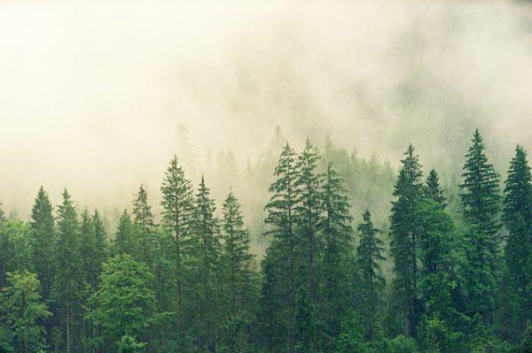 樹木図鑑の人気おすすめランキング15選【代表種から区別の方法まで解説】