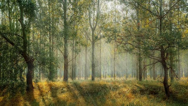 樹木図鑑の選び方