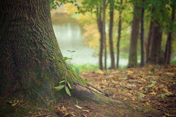 樹木の魅力