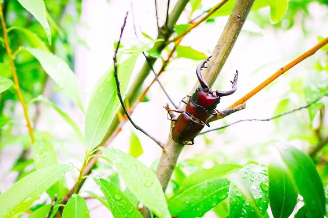 クワガタムシ図鑑の人気おすすめランキング6選【ムシキングや甲虫図鑑も紹介】