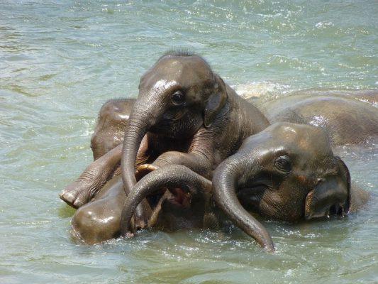 水浴びをするゾウたち