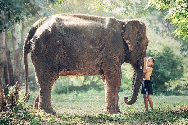 ゾウと少年