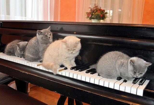 ピアノねこ