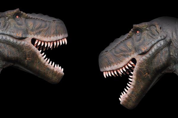 2匹のティラノサウルス