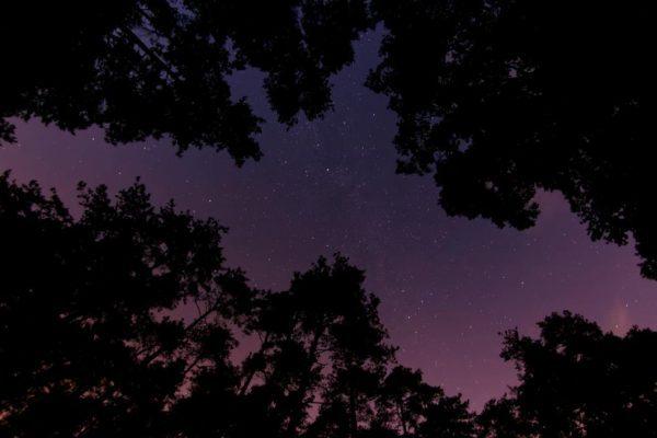 森から空を見上げたら